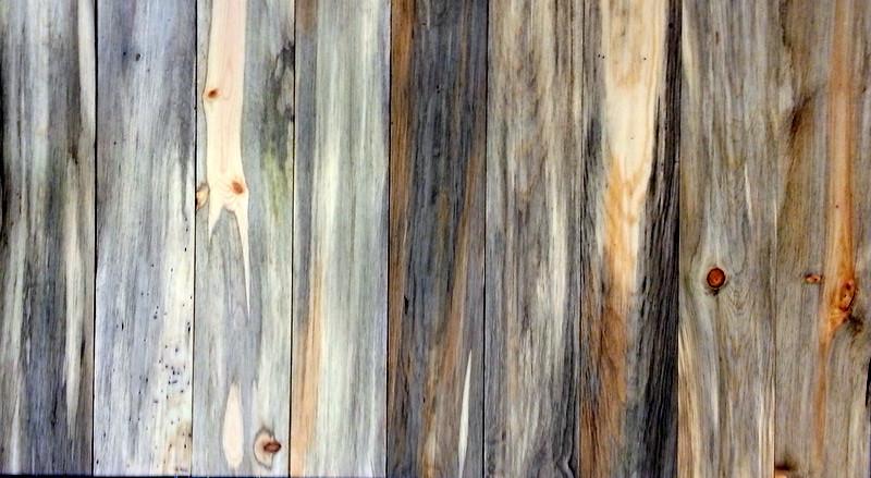 beetle kill pine lumber