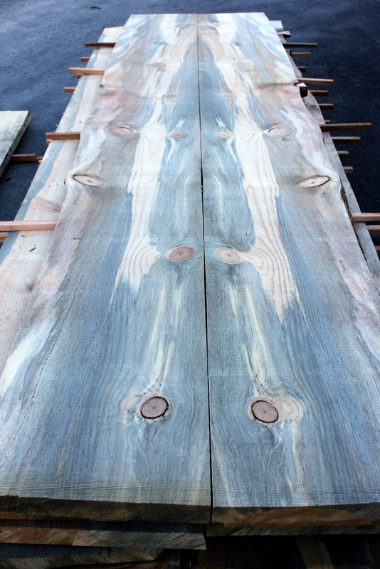 Mountain Pine Beetle Blue Stain Pine Mantles Sustainable