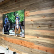 blue stain pine bank wall